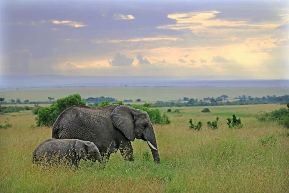 36--Kenya Elephants