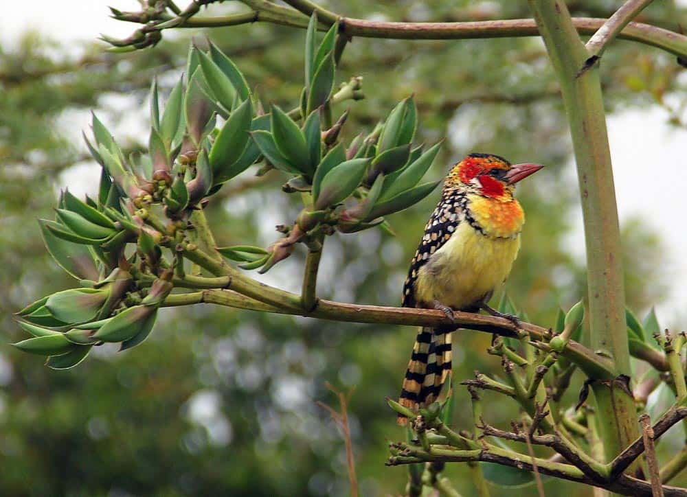 56--Kenya Bird