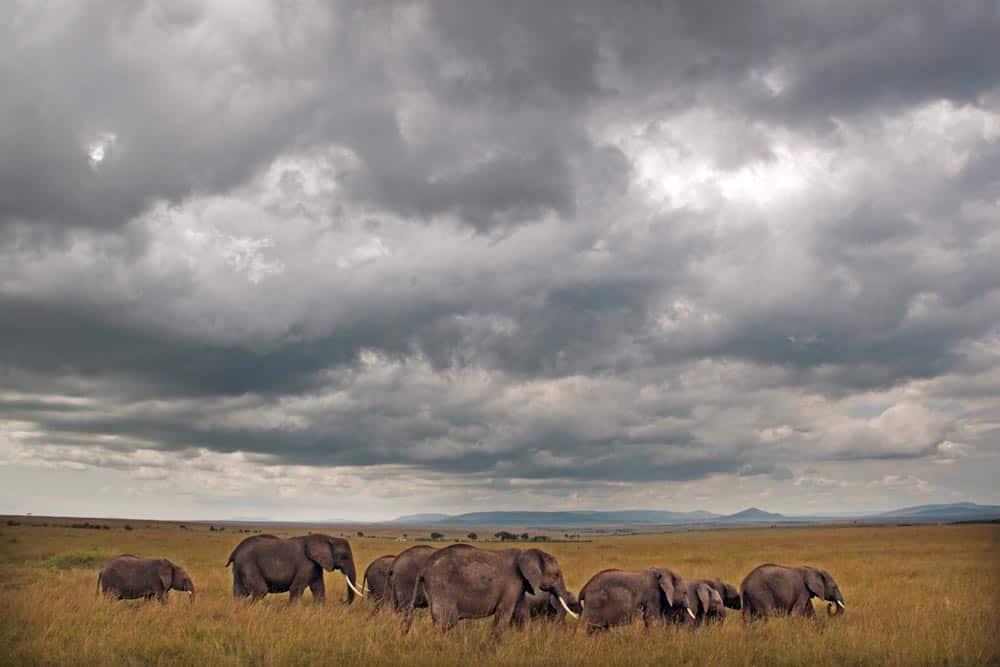 59--Elephant Family