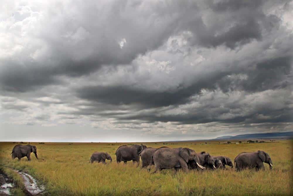 9--Elephant Family